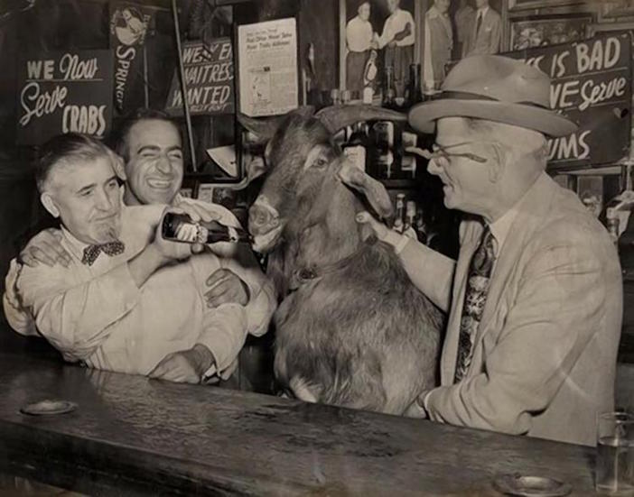 Murphy the goat with Sianis (left) with a goatee